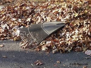 Pile of leaves and leaf rake
